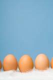 Bruine eieren in een rij met blauwe achtergrond Stock Fotografie