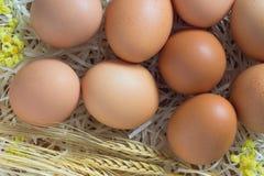 Bruine eieren in een stro Stock Fotografie