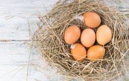 Bruine eieren in hooi Stock Afbeelding