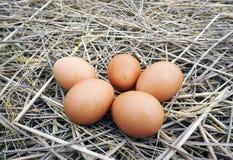 Bruine eieren in houten kom Royalty-vrije Stock Afbeeldingen