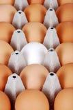 Bruine eieren met één wit ei Royalty-vrije Stock Afbeeldingen