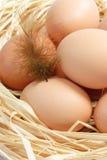 Bruine Eieren met Veer Royalty-vrije Stock Afbeelding