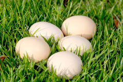 Bruine eieren op gras Royalty-vrije Stock Fotografie