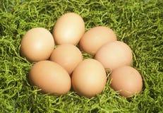 Bruine Eieren op Groen Gras Stock Fotografie
