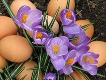 Bruine eieren op rode glasplaat en doorstaan hout Stock Afbeelding