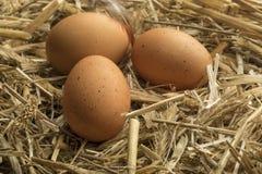 Bruine eieren op stro in kippenhok Stock Foto's