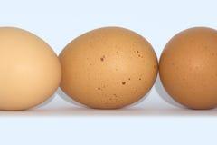Bruine eieren op witte achtergrond Royalty-vrije Stock Afbeelding