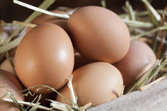 Bruine Eieren in Stro Stock Afbeelding