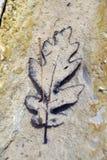 Bruine eiken bladeren die op de bodem van kreek liggen Royalty-vrije Stock Foto's
