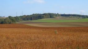 Bruine en groene gebieden Stock Foto