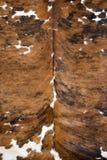 Bruine en witte echte koehuid Stock Afbeelding