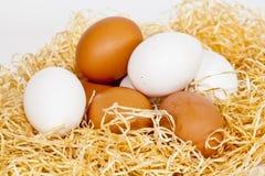 Bruine en witte Eieren Stock Afbeeldingen