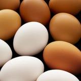 Bruine en witte eieren Stock Foto