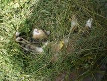 Bruine en witte kattenslaap in groen hooi stock afbeelding