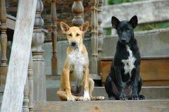 2 bruine en zwarte straathonden Royalty-vrije Stock Afbeeldingen
