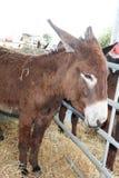 bruine ezel op landbouwbedrijf stock fotografie