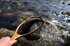Bruine Forel stock fotografie