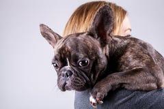 Bruine Franse buldog die op de schouder van de eigenaar liggen royalty-vrije stock foto's