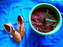 Bruine gekleurde schoenen op blauwe die achtergrond naast de installatie wordt gesteld royalty-vrije stock afbeeldingen