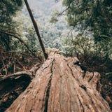 Bruine gevallen boom stock afbeeldingen