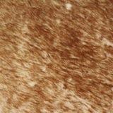 Bruine geweven zweep Stock Foto