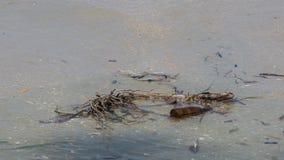 Bruine glasfles, een huisvuil, op het strand Royalty-vrije Stock Foto's