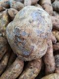 Bruine, grote en ronde die yambonen, omhoog in een marktbak worden gestapeld, klaar voor hun enthousiaste kopers stock afbeelding