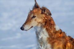 Bruine hond royalty-vrije stock foto
