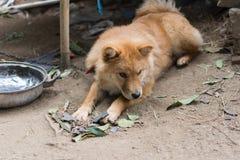 Bruine hond royalty-vrije stock afbeeldingen