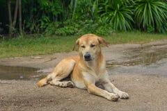 Bruine hond die ter plaatse bepalen royalty-vrije stock foto