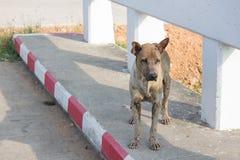 Bruine hond die zich op het voetbad bevinden Royalty-vrije Stock Foto