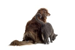 Bruine hond en grijze kat stock afbeeldingen