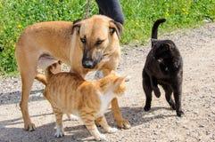 Bruine hond en twee katten samen Stock Afbeeldingen