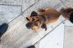 Bruine hond op de straat stock foto's