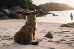Bruine hondzitting alleen op het alleen strand stock afbeeldingen