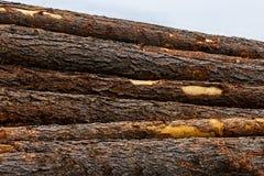 Bruine horizontale de stapelstapel van de boomstam bruine schors van van de logboeken ruw ruwe oppervlakte registreren als achter royalty-vrije stock fotografie
