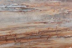 Bruine houten backgtound Gedetailleerde Textuur Stock Fotografie
