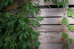 Bruine houten de textuurachtergrond van de plankmuur Stock Afbeelding