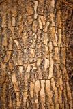 Bruine houten schors royalty-vrije stock afbeelding