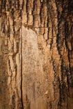 Bruine houten schors stock afbeelding