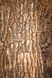Bruine houten schors royalty-vrije stock fotografie