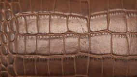 Bruine huid Stock Foto's