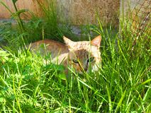 Bruine kat Stock Afbeeldingen