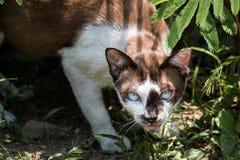 Bruine kat Stock Foto's