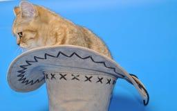 Bruine Kat in de Hoed Stock Foto