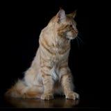 Bruine kat die kant bekijken stock foto