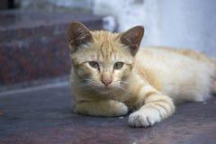 Bruine kat die op de vloer en het kijken liggen stock foto's