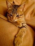 Bruine kat op de bruine deken stock foto's