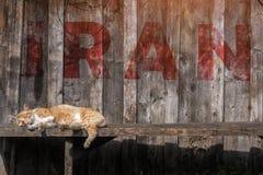 Bruine kattenslaap op een bank in Iran inschrijving Iran royalty-vrije stock afbeelding
