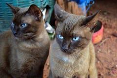 Bruine kattenzitting op grond in huis Royalty-vrije Stock Fotografie